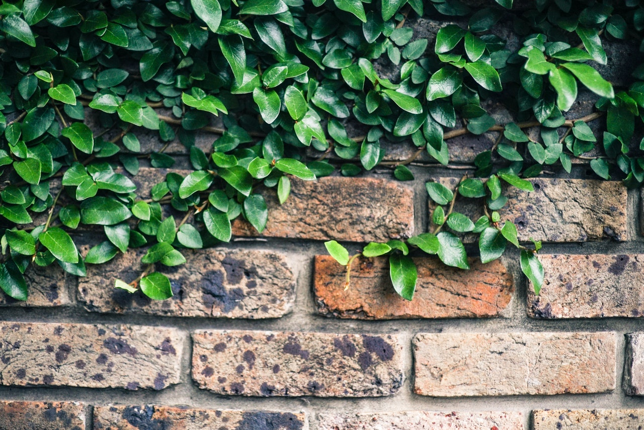 green-leaf-plant-on-wall-1662567.jpg